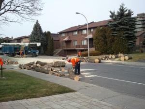 Einstein tree removal Nov 2012