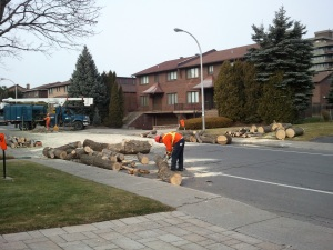 Einstein tree removal Nov 2012